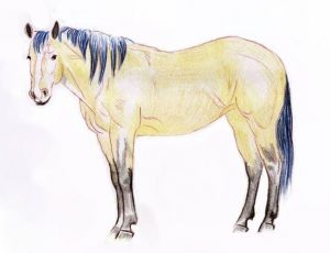 Printable Best Horse Coloring Pages