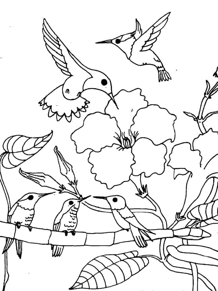 Coloring Pages Hummingbirds Flowers