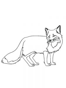Coloring Pages Of A Fox