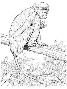 Coloring Pages Of A Lemur