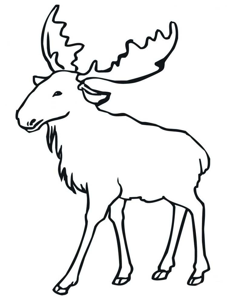 Coloring Pages Of A Moose