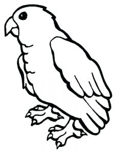 Coloring Pages Of A Parrot