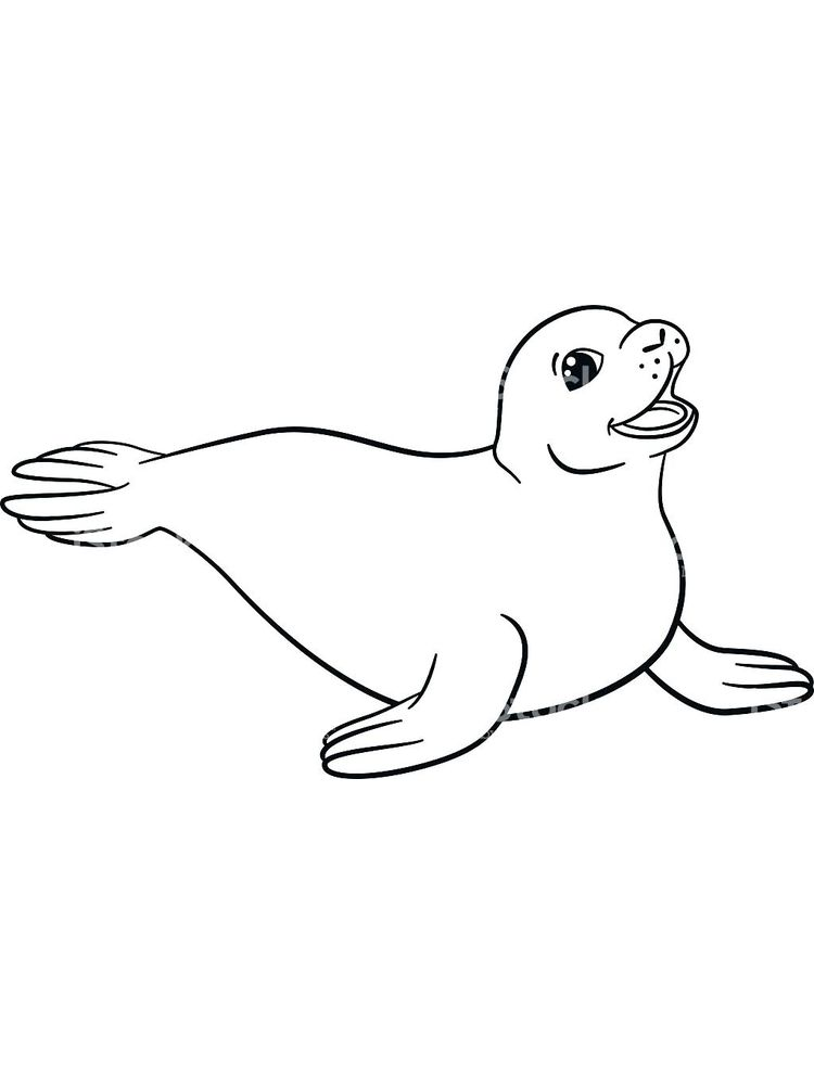 Coloring Pages Of A Seal