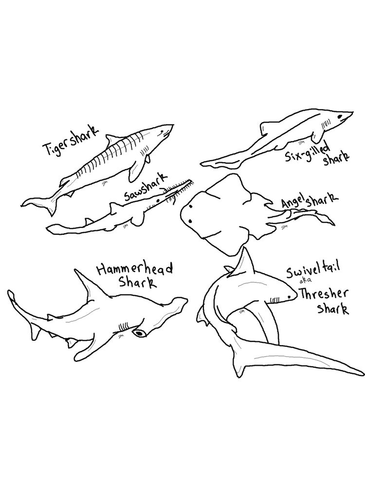 Coloring Pages Of A Shark