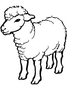 Coloring Pages Of A Sheep