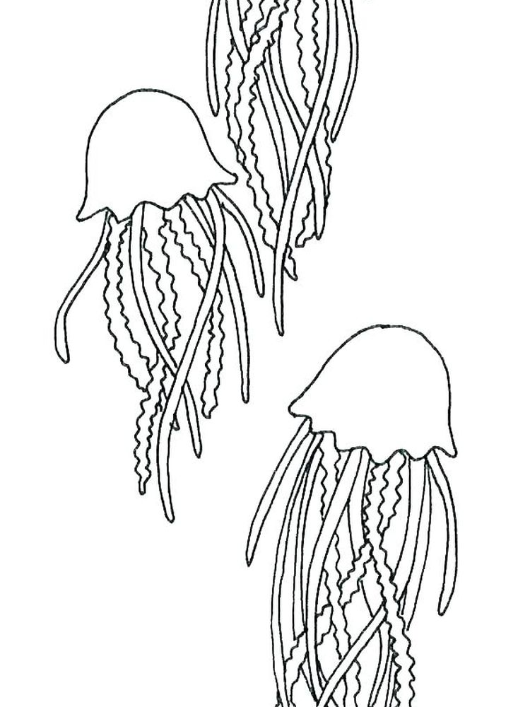 Coloring Pages Of Jellyfish