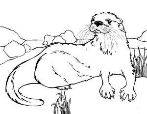 Coloring Pages River Otter