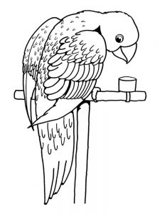 Cute Parrot Coloring Pages