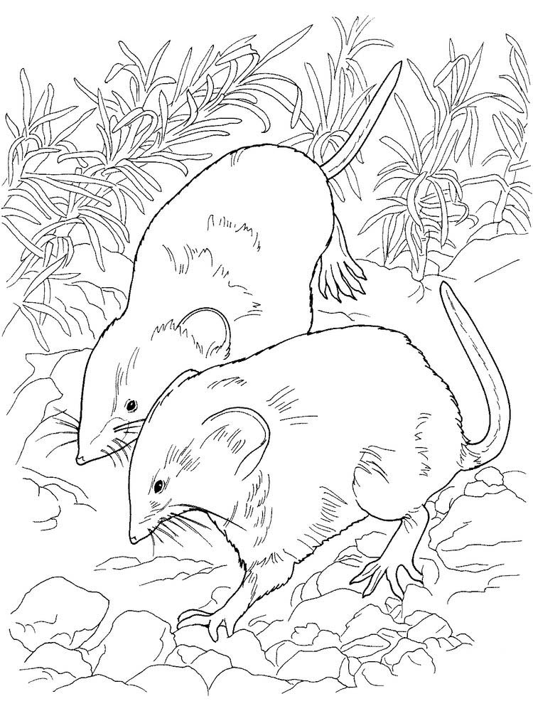 Cute Rat Coloring Pages