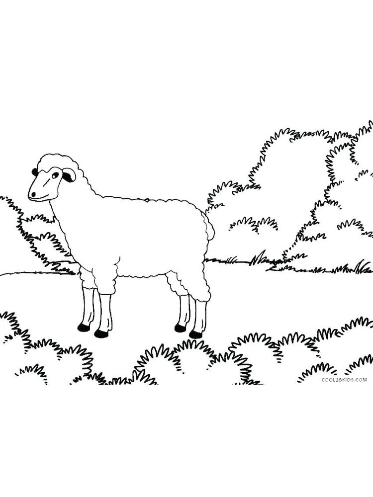 Dall Sheep Coloring Pages