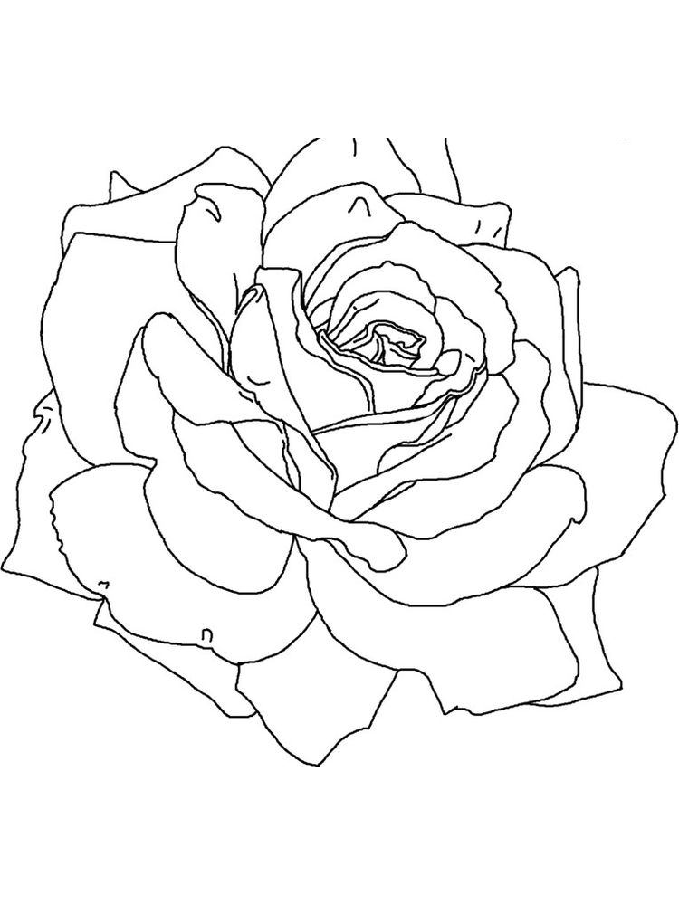 Detailed Rose Coloring Page
