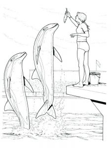 Dolphin Coloring Pages For Preschool
