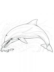 Dolphin Coloring Pages Free Printable