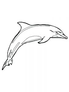 Dolphins Coloring Pages Easy