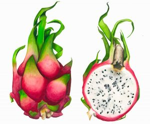 Dragon Fruit Coloring Pages