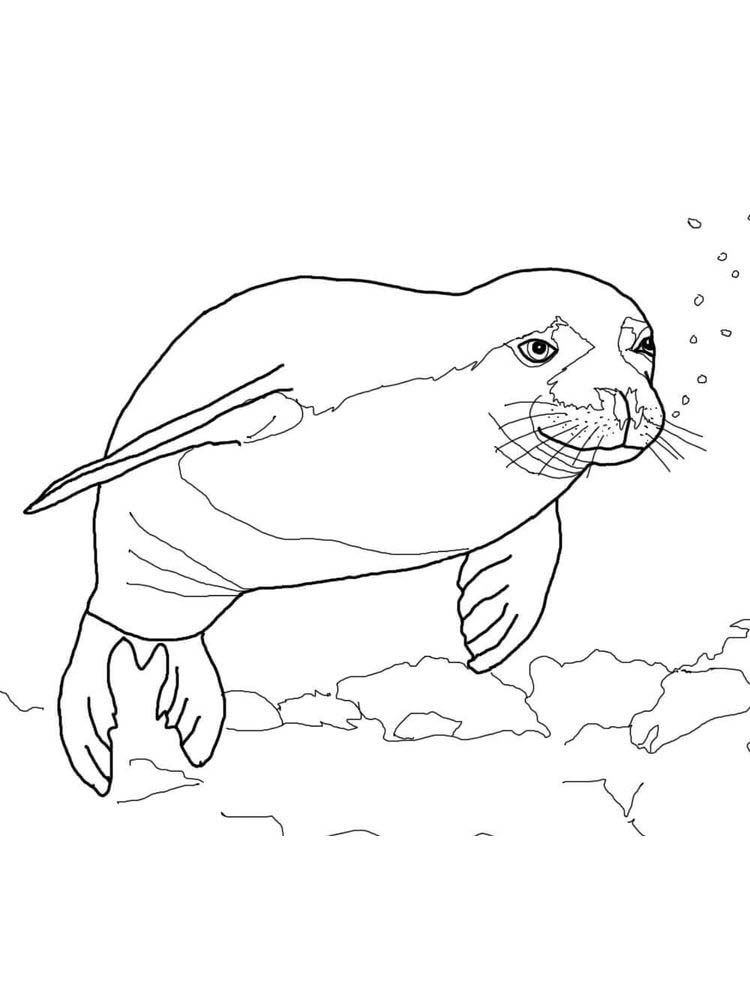 Eal Coloring Pages