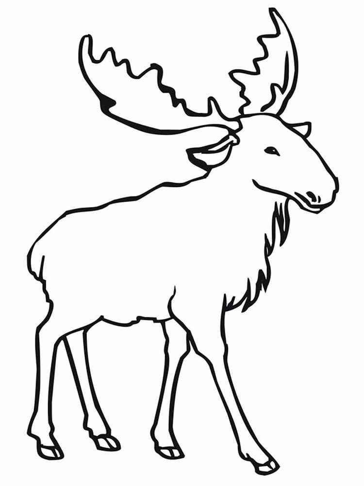 Easy Moose Coloring Pages