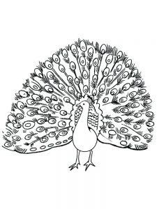 Easy Peacock Coloring Pages