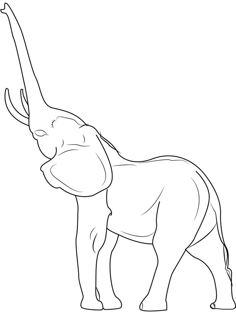 Elephant Coloring Pages To Print For Adults