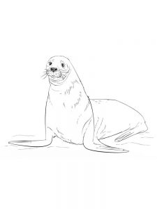 Elephant Seal Coloring Pages