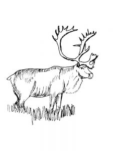 Elliot Moose Coloring Pages