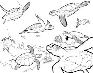 Family sea turtle coloring pages