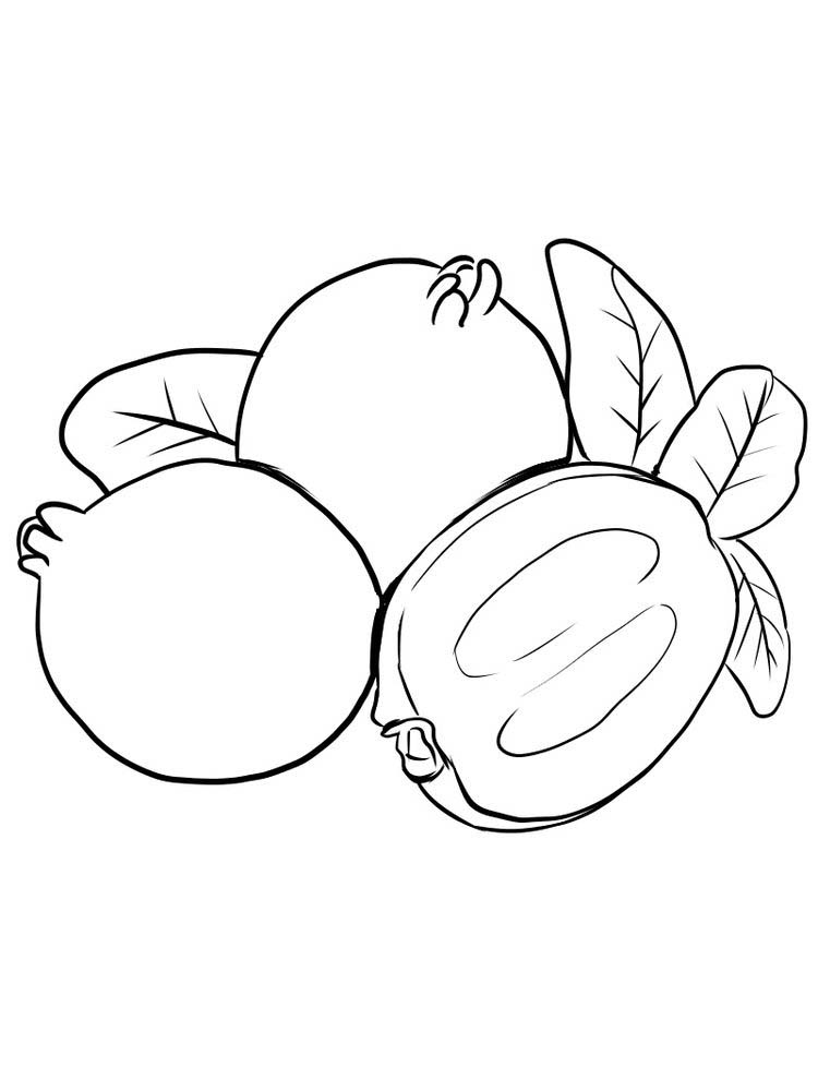 Feijoa coloring picture print