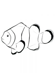 Fish Coloring Pages Realistic