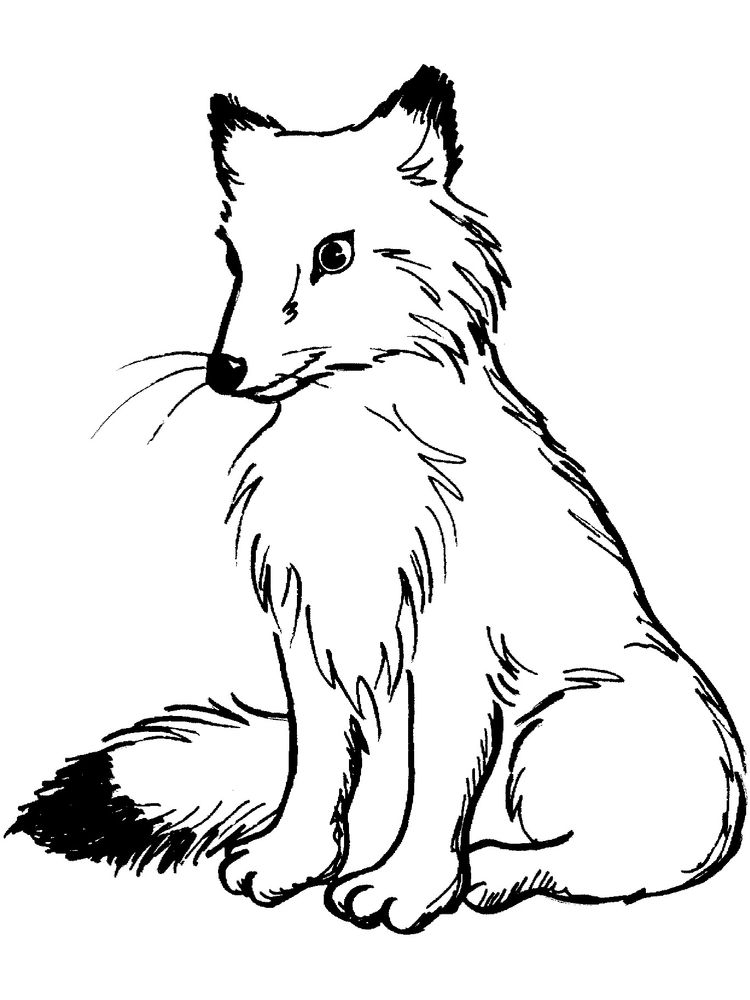 Fox Coloring Pages Printable