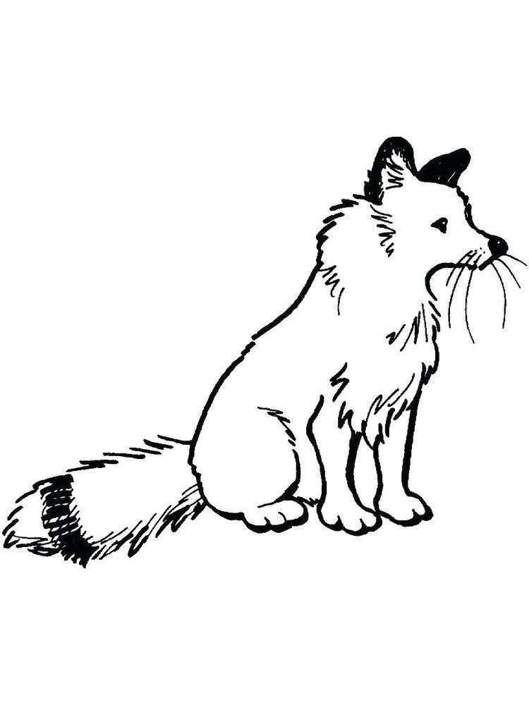 Fox Racing Coloring Pages