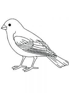 Free Angry Bird Coloring Pages To Print