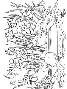 Free Bird Coloring Pages For Adults