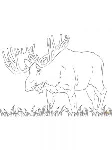 Free Coloring Book Pages Moose