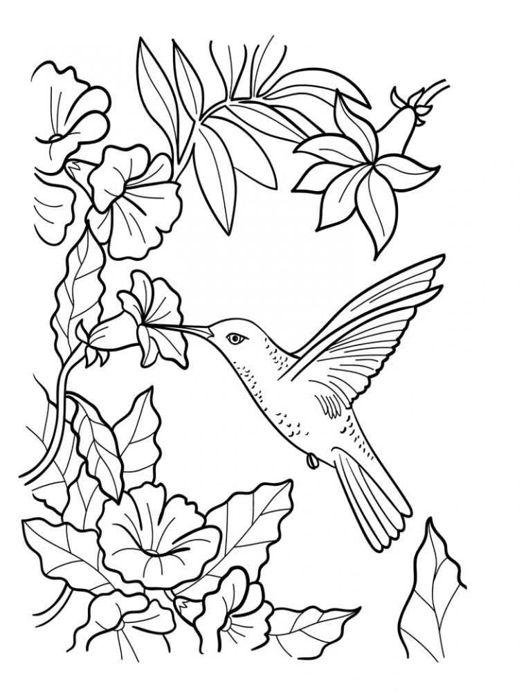 Free Coloring Pages Hummingbird