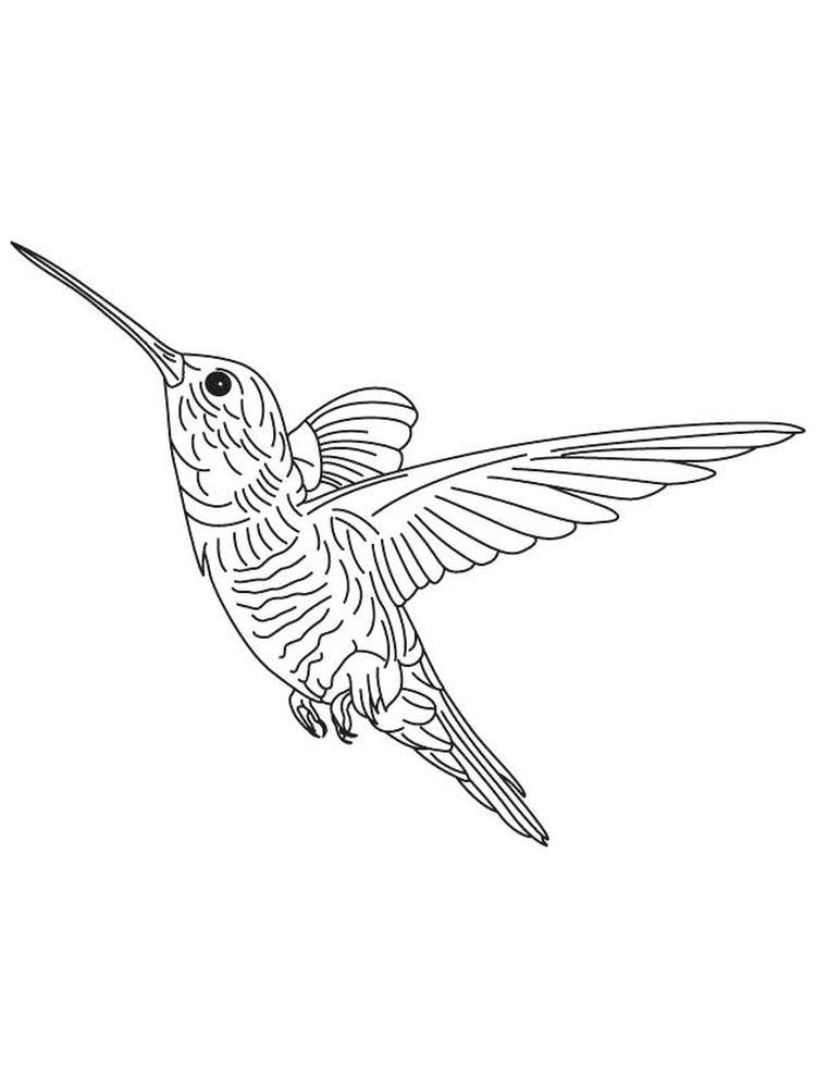 Free Coloring Pages Of Hummingbirds