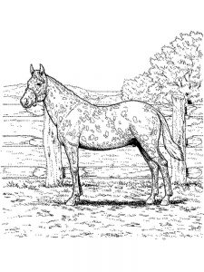 Free Horse Coloring Pages For Adults