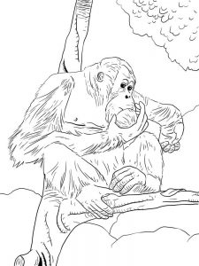 Free Orangutan Coloring Pages
