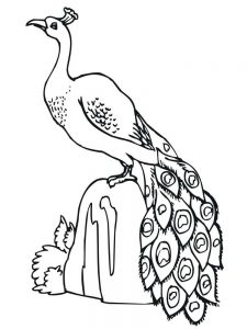 Free Peacock Coloring Pages For Adults