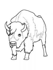Free Printable Coloring Pages Of Buffalo