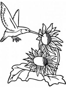 Free Printable Coloring Pages Of Hummingbirds