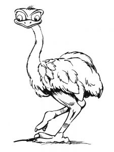 Free Printable Ostrich Coloring Pages