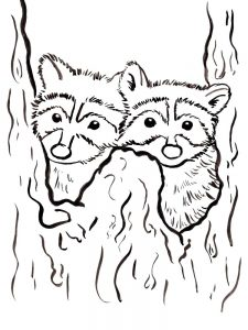 Free Printable Raccoon Coloring Page