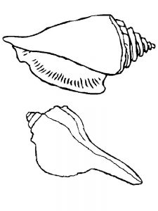 Free Printable Shell Coloring Pages