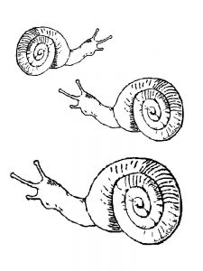 Free Printable Snail Coloring Pages
