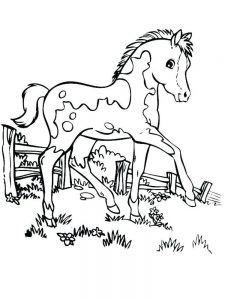 Free Printable Wild Horse Coloring Pages