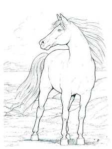 Free Wild Horse Coloring Pages