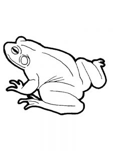 Frog Coloring Pages Fly