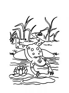 Frog Coloring Pages Free Printable