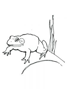 Frog Life Cycle Coloring Pages