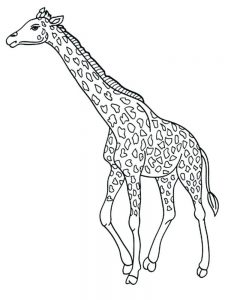 Giraffe Coloring Pages For Toddlers